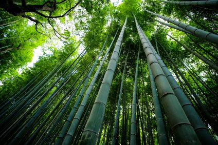 Bamboo as structural material